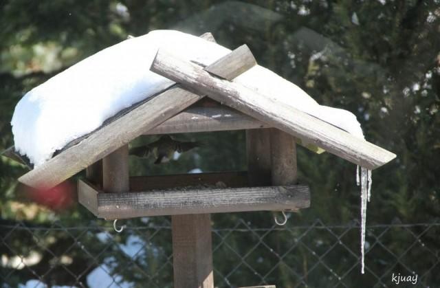 vogelhaus 036