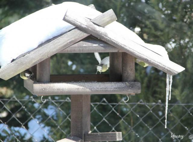 vogelhaus 117