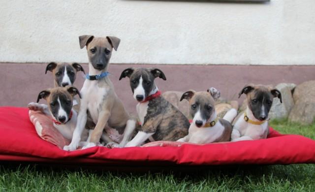puppys010514