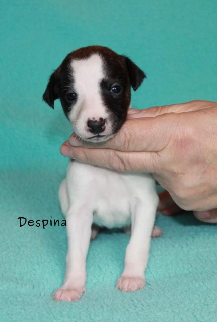 Despina3wo_2