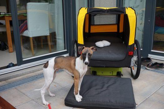 Garten 1 - Fletcher's neuer Lamborghini; die ersten paar Meter hat er sich schon chauffieren lassen.
